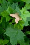 Hölzerner Schmetterling auf einem Hintergrund von grünen Blättern eines Baums Stockbild