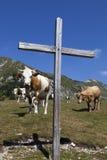 Hölzernes Kreuz und Kühe auf dem Berg Stockfotos