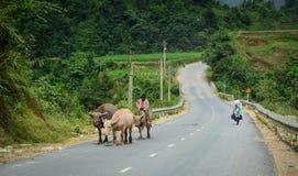 Hmong folk på den lantliga vägen i nordliga Vietnam Royaltyfri Foto