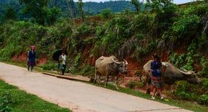 Hmong folk på den lantliga vägen i nordliga Vietnam Royaltyfri Fotografi