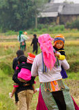 Hmong folk som arbetar på risfält Royaltyfri Bild