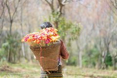 Hmong girl with tradiyional dress with basket. Of agricultural crops walking in the forest Royalty Free Stock Photo