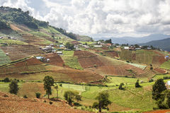 Hmong hill tribe village and terraced vegetable field Stock Photo