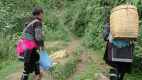 Hmong Minority women walk through forest stock video
