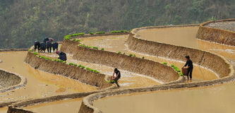 Hmong people working on rice field in Moc Chau, Vietnam Royalty Free Stock Photography
