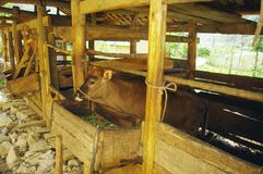 Hmong stable Photos stock