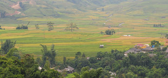 Hmong Village Between The Rice Fields In Sapa Royalty Free Stock Photos