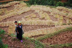Hmong woman with her son on the rice field at Sapa town, northern Vietnam Stock Image