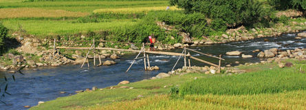 Hmong woman passing a bamboo bridge Royalty Free Stock Photos