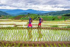 Hmong woman with rice field terrace background Stock Images