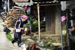 Hmong women carry firewook and walking in morning market countryside of Vietnam. SAPA, Vietnam – September 10, 2014 : Hmong women people are walking to royalty free stock image
