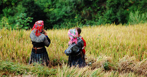 Hmong women working on the rice field at Sapa town, northern Vietnam Royalty Free Stock Images