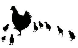 Höna fågelungar, rooster, stor familj   Royaltyfri Foto