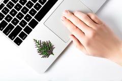 Hnad che cerca regalo le feste di natale sul computer portatile con il pino decorato del nuovo anno Fotografie Stock Libere da Diritti