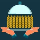 Hände, die eine Umhüllungsplatte mit den Ohren des Weizens halten Lizenzfreie Stockbilder
