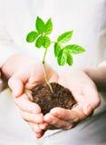 Hände, die einen neuen Baum anhalten Stockbild
