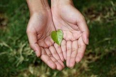 Hände, die geformtes grünes Blatt des Herzens halten Stockfotos
