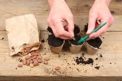 Hände, die Startwerte für Zufallsgenerator pflanzen Stockfoto