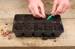Hände, die Startwerte für Zufallsgenerator pflanzen Stockbilder