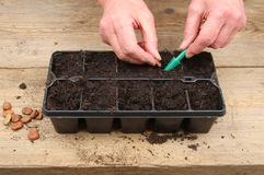 händer som planterar frö Arkivbilder