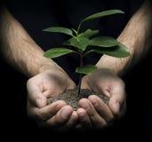 Händer som rymmer en växt Royaltyfri Foto