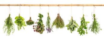 Hängande nya örter basilika, vis man, timjan, dill, mintkaramell, lavendel Arkivfoton