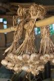 Hängender Knoblauch auf Trockengestell Stockfoto