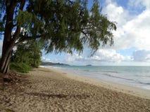 Hängning för Ironwoodträd över den Waimanalo stranden Royaltyfria Foton