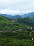 Ho Chi Minh trail, forest, mountain, terrain Royalty Free Stock Photos