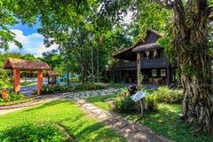 Ho Kham Luang - Flora Ratchaphruek real en la mañana soleada Imágenes de archivo libres de regalías