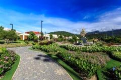 Ho Kham Luang - Flora Ratchaphruek real en la mañana soleada Fotografía de archivo libre de regalías