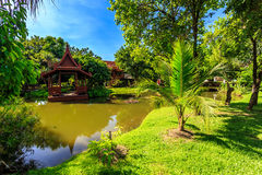 Ho Kham Luang - Flora Ratchaphruek reale alla mattina soleggiata Immagini Stock