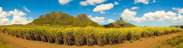 hoa khanh plantaci gubernialna trzcina cukrowa Vietnam Panoramiczny krajobraz fotografia stock