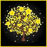 Hoa mai yellow peach tree Stock Photography