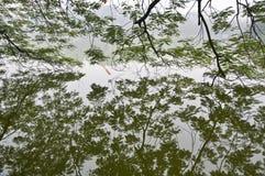 Hoan Kiem Lake, Hanoi, Vietnam. Royalty Free Stock Photos