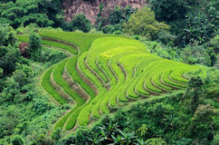 Hoang Su Phi terraced fields Stock Photos