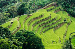 Hoang Su Phi terraced fields Royalty Free Stock Images