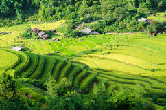 Hoang Su Phi terraced fields Stock Photography