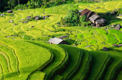 Hoang Su Phi terraced fields Royalty Free Stock Photography