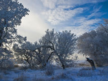 hoar δέντρα παγετού Στοκ φωτογραφία με δικαίωμα ελεύθερης χρήσης