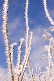hoar χειμώνας δέντρων κλάδων Στοκ Εικόνες