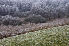 hoar заморозка Стоковые Фотографии RF