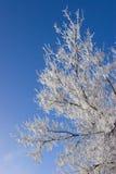 hoar заморозка Стоковое Изображение RF
