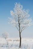 hoar заморозка Стоковые Изображения RF