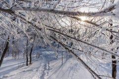 Hoar покрыл деревья в зимнем парке, горизонтальном Стоковое Фото