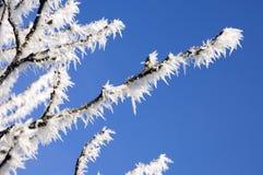 Hoar auf Baum in der Winternahaufnahme Lizenzfreies Stockbild