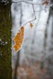 Hoar auf den Niederlassungen von Bäumen im Wald Lizenzfreie Stockfotos