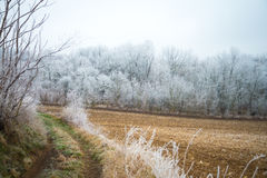 Hoar auf den Niederlassungen von Bäumen im Wald Stockfotografie