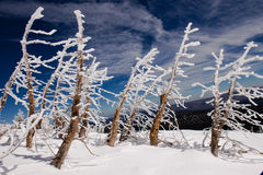 Hoar bereifte Bäume Lizenzfreie Stockfotos