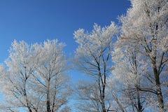 Hoar-berijpte Bomen Stock Afbeelding